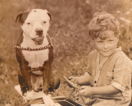 American pit bull terrier, American gamedog, pit bull, pitbull, pittbull, dog fighting, BSL, Boldog Kennel, Bandog Dread, Boldog Dirk, schutzhund, french ring, dogsport, Olympia, washington, Diane Jessup, pit bull treadmill, pit bull jenni, pit bull springpole, pit bull feeding, pit bull conditioning, pit bull training, dog, pit bull puppy, Sorrells,   historical, history, dog world, american staffordshire